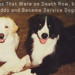5 and ½ Dogs That Were on Death Row, but Beat the Odds and Became Service Dogs