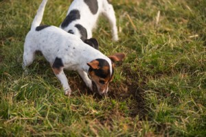 puppy training, dog digging, how to train a dog not to dig