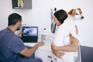 ultrasound to find dog bowel obstruction