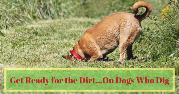 Get Ready for the Dirt…On Dogs Who Dig