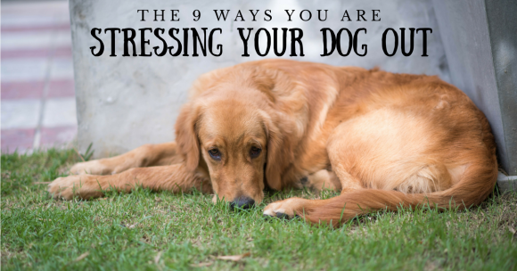 The 9 Ways You Are Stressing Your Dog Out