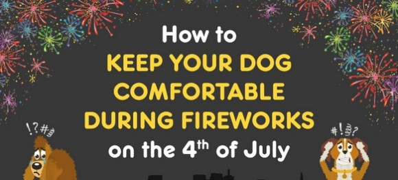 Keeping Your Dog Comfortable During Fireworks This 4th of July