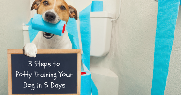 puppy potty training, dog potty training, crate training