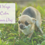 Solliquin for Dogs and Other Natural Remedies to Aide Calm
