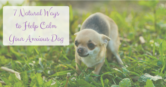 7 Natural Ways to Help Calm Your Anxious Dog