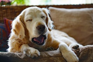natural ways to calm an anxious dog, puppy training