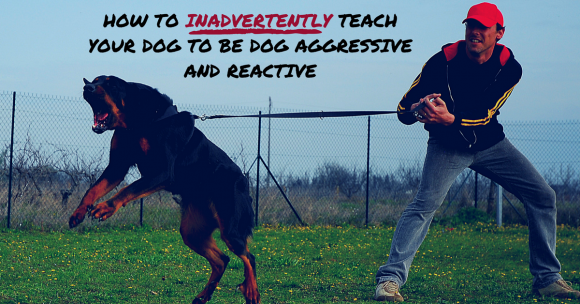 How to Inadvertently Teach Your Dog to Be Dog Aggressive and Reactive
