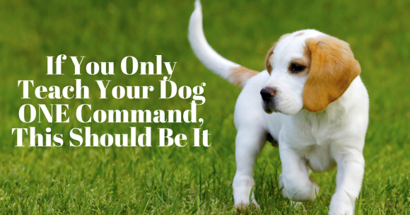 If You Only Teach Your Dog ONE Command, This Should Be It