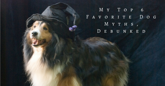 My Top 6 Favorite Dog Myths, Debunked