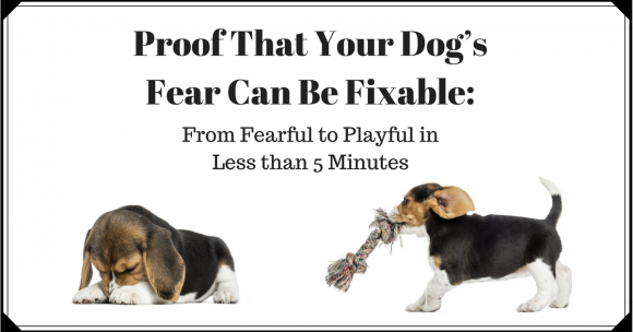 Proof That Your Dog's Fear Can Be Fixable: From Fearful to Playful in Less than 5 Minutes