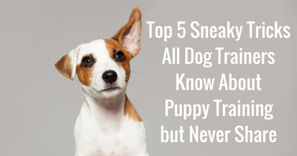 Top 5 Sneaky Tricks All Dog Trainers Know About Puppy Training but Never Share