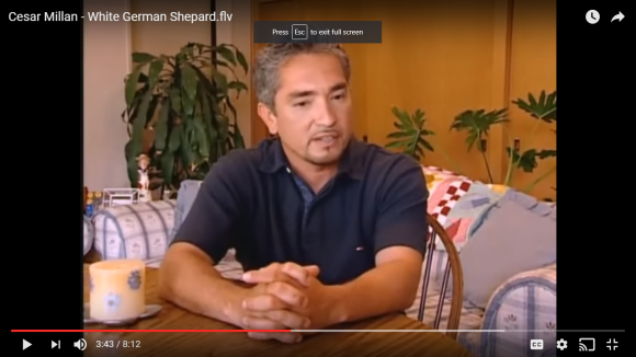 Cesar Millan, service dog training