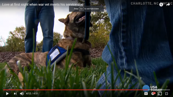 Service Dog, Service Dog Training, Training a Service Dog, puppy training