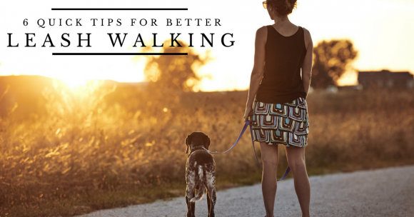 6 Quick Tips for Better Leash Walking