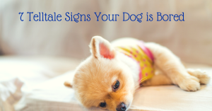dog training, signs dog is bored