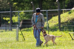 leash training, tips for better leash walking