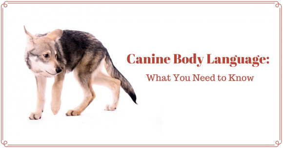canine body language, dog training