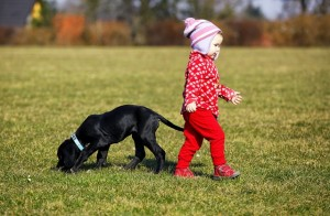 puppy training, dog training, dog training games