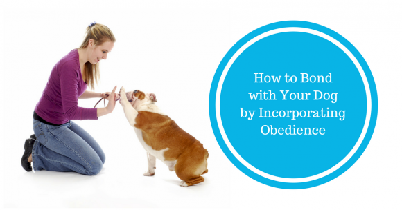 How to Bond with Your Dog by Incorporating Obedience