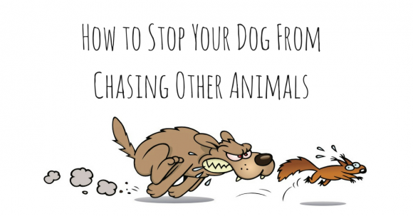 stop dog from chasing other animals