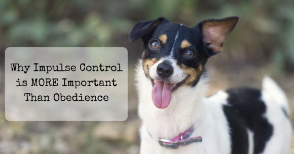 Why Impulse Control is MORE Important Than Obedience