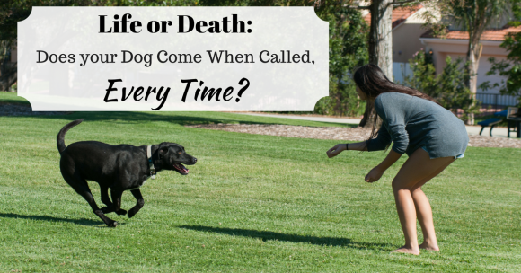 Life or Death: Does your Dog Come When Called, Every Time?