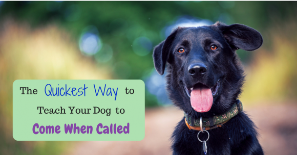 The Quickest Way to Teach Your Dog to Come When Called
