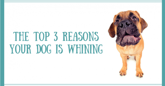 dog whining, puppy training