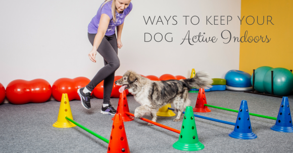 Ways to Keep Your Dog Active Indoors