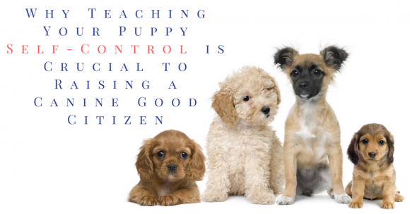 puppy training, teaching puppy self-control, canine impulse control