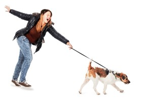leash etiquette, leash manners, leash reactivity, Leash Training