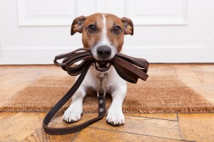 leash training, leash manners, leash etiquette, leash reactivity