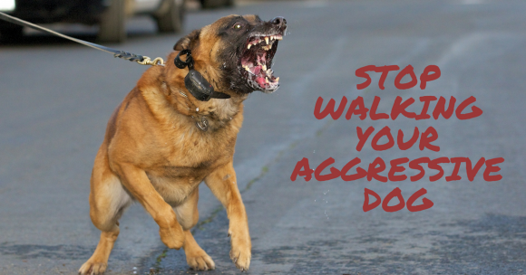 Stop Walking Your Aggressive Dog