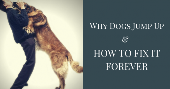 Why Dogs Jump Up & How to Fix it Forever