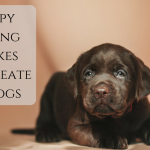 13 Puppy Training Mistakes That Create Bad Dogs