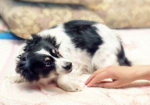 dangers of dogs and children