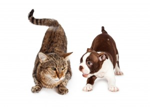 Does Dog Food Injure Cats