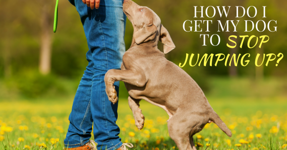 How Do I Get My Dog to Stop Jumping Up?