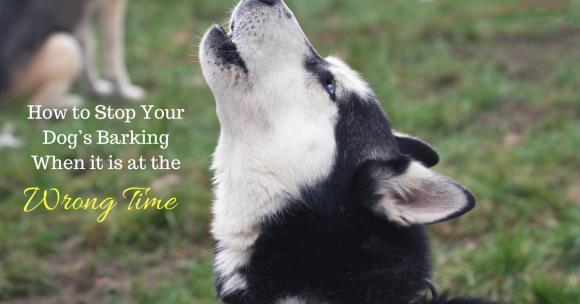How to Stop Your Dog's Barking When it is at the Wrong Time