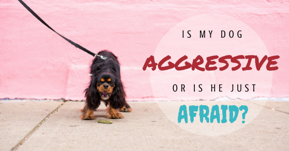 dog aggression, dog fear, dog fear aggression
