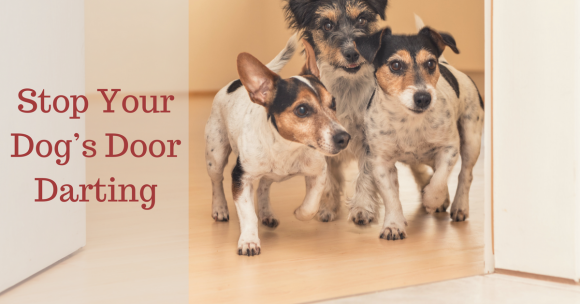 Stop Your Dogu0027s Door Darting & Stop Your Dogu0027s Door Darting - TheDogTrainingSecret.com