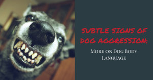 dog aggression, dog body language