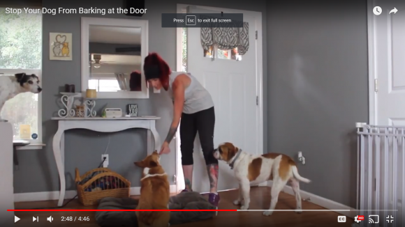 How to stop dogs from barking at the door thedogtrainingsecret eventshaper