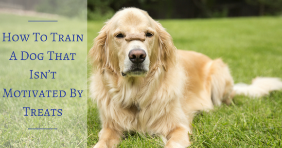 How To Train A Dog That Isn't Motivated By Treats