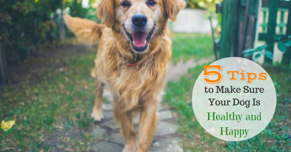 5 Tips to Make Sure Your Dog Is Healthy and Happy