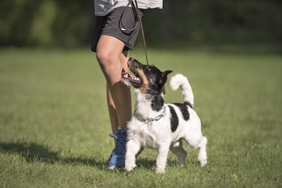 leash training, leash manners, tips for a more enjoyable walk with your dog