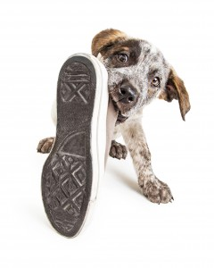self-rewarding behaviors and why they matter in dog training, dog training, puppy training