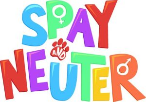 spaying and neutering reduces dog humping