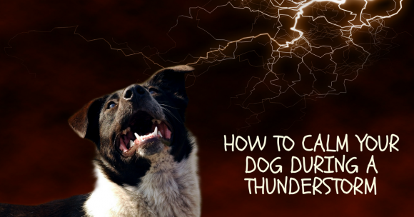 How To Calm Your Dog During a Thunderstorm