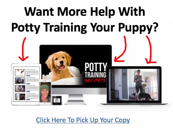 Why does my puppy pee when excited and how to stop it pts ad 2 m4hsunfo Images